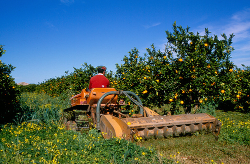 Aziende agricole: facilitazioni nell'accesso al credito